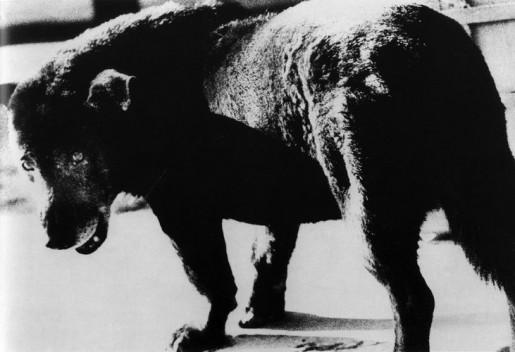 Daido Moriyama, 'Stray Dog', 1971