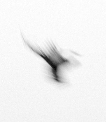 Trine Sondergaard, photography.