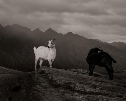 Simon Harsent, photography.
