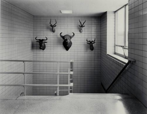 Lynne Cohen, photography.