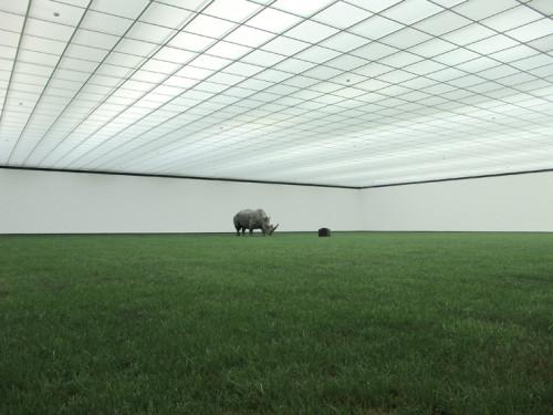 Stefan Banz, installation, Wurtgenburg.