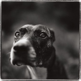 Keith Carter, photography.