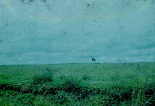 Sunil Shah, photography.