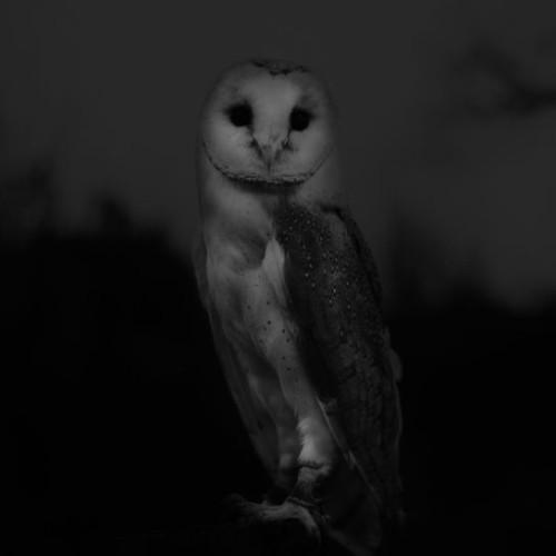 Sophy Rickett, photography.