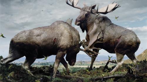 Simen Johan, photography (Natural History Museum, U.S.).