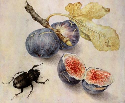 Giovanna Garzoni (17th century Italy)