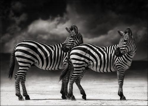Nick Brandt, photography.